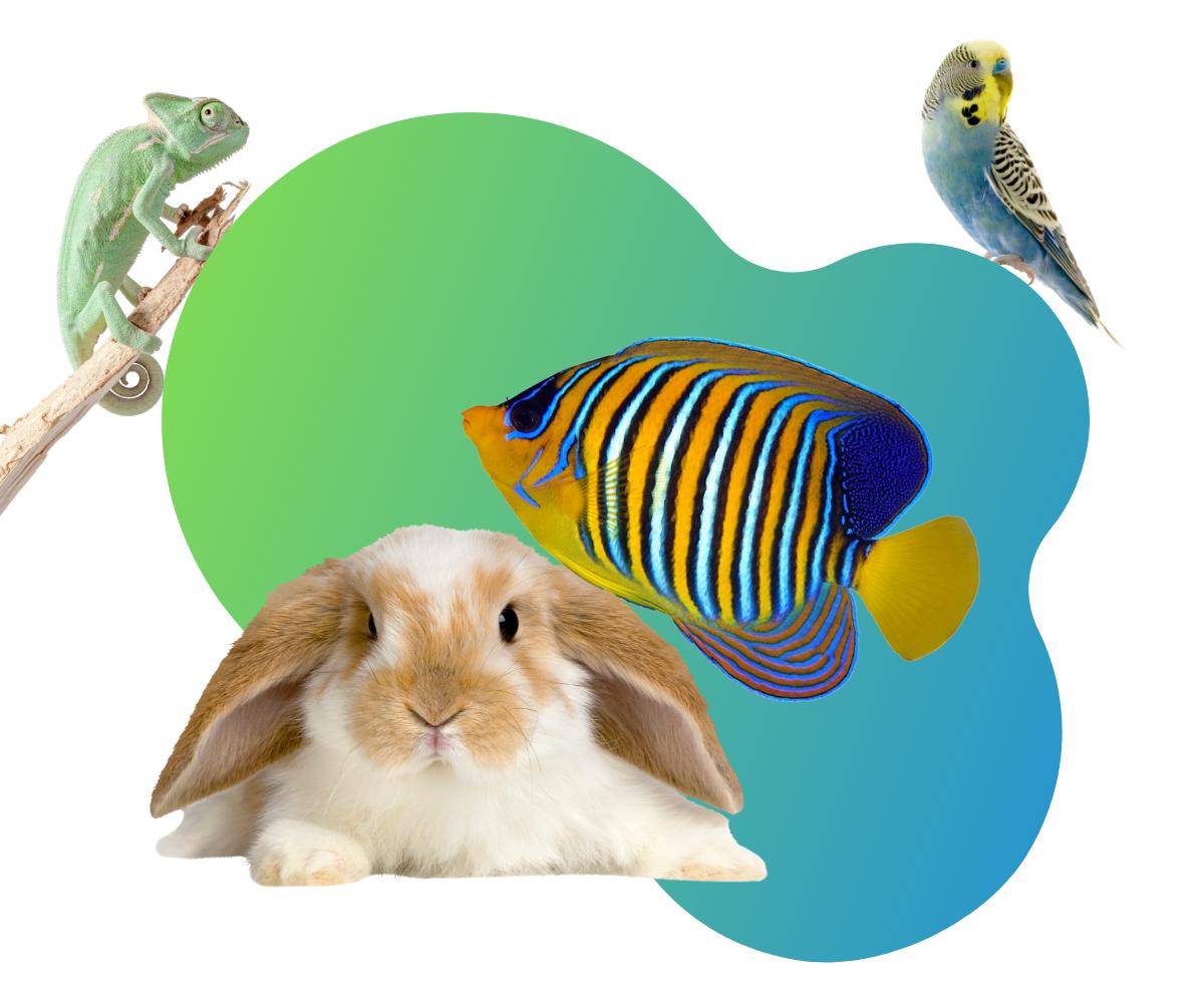 https://apcritter.com/wp-content/uploads/2020/08/pet-store.png